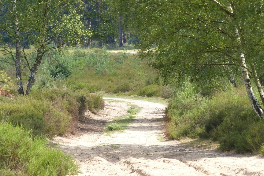 Wahner Heide – eine Reise in dieVergangenheit