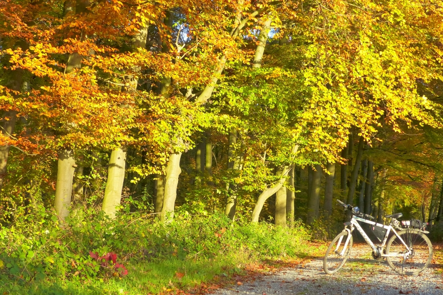 Herbst – meine liebsteJahreszeit