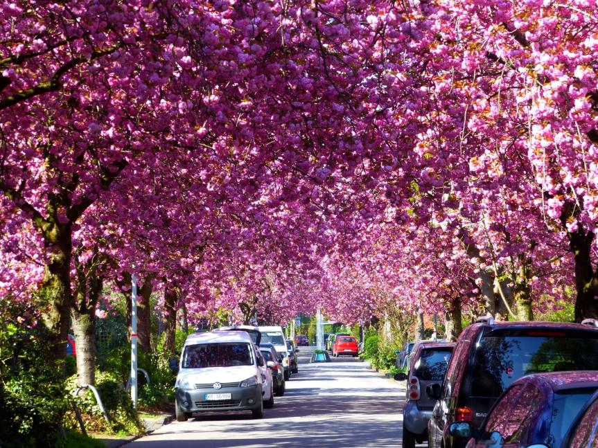 Mittagspause, Kirschblüte und dasBauhaus